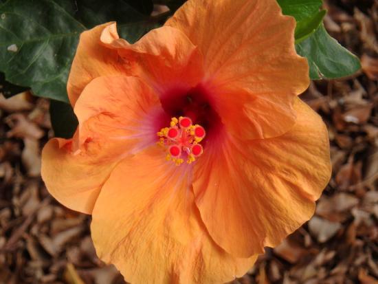 Tropical Gardens of Maui: photo1.jpg
