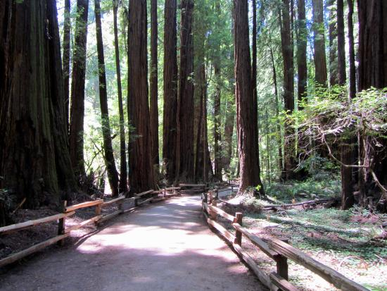 Preserving The Forest Primeval Picture Of Muir Woods