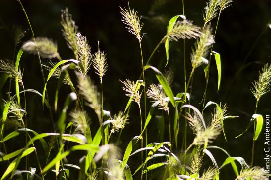Mary K. Oxley Nature Center: Grass Seefs