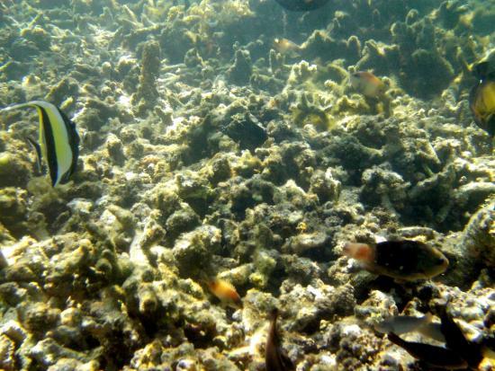 schnorcheln mauritius