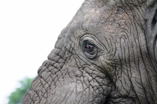 Elephant & I : Elephant & eye