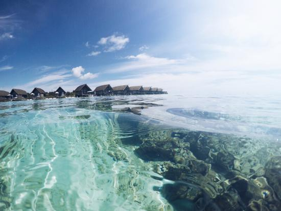 Cocoa Island by COMO: House Reef