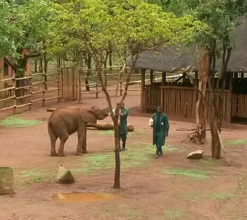The Lilayi Elephant Nursery