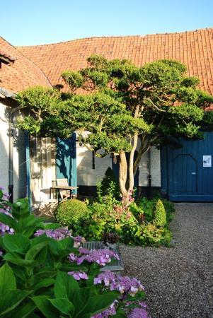 Alveringem, Bélgica: Binnentuin met unieke buxusboom.