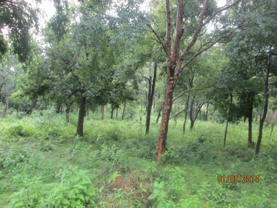 Attapadi Reserve Forest