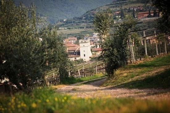 Azienda Agricola Corteforte: Agriturismo_Valpolicella_Corteforte