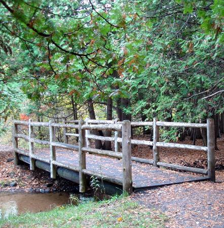 Grand Traverse Natural Education Reserve: Many trails have bridges & boardwalks, some have wheelchair access