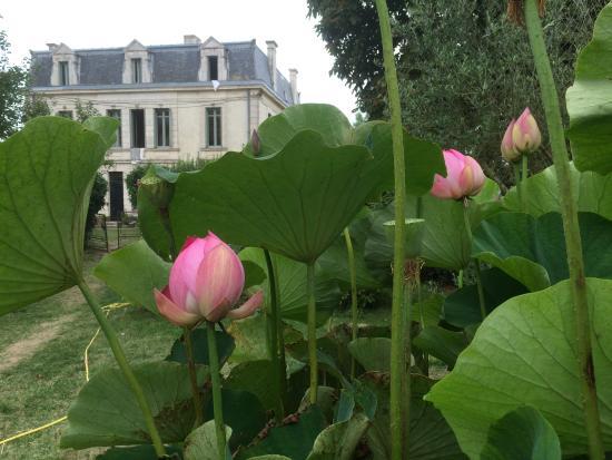 Mortagne-sur-Gironde, Francia: heerlijke tuin met rust en ruimte
