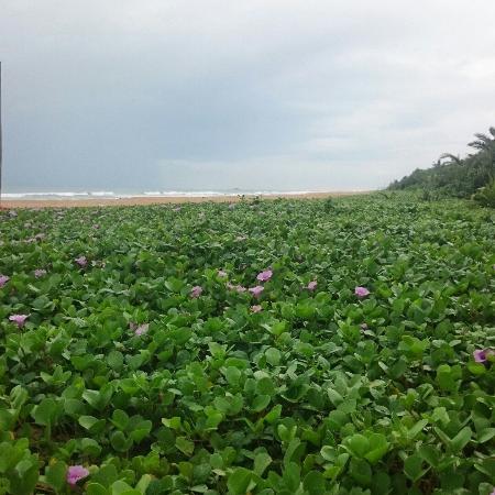 Bentota, ศรีลังกา: Пляж