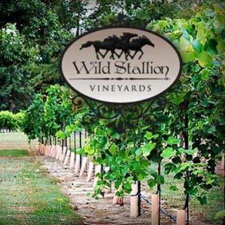 Wild Stallion Vineyards Spring 2019 All You Need To