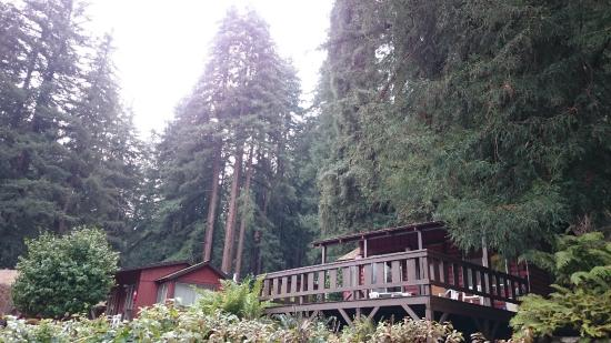 Fern River Resort Motel: Cabin 8 from the river