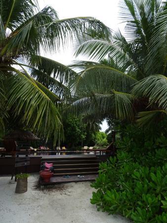 Originale Déco Bambous du Jardin Adaaran Vadoo Resort - Picture of ...