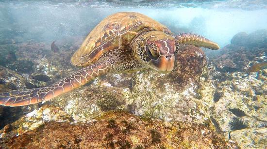 Ka'anapali Beach: Turtle closeup