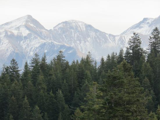 Les Blanches Provencales : Montagne