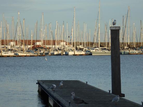 Picture of center parcs port zelande ouddorp for Port zelande map