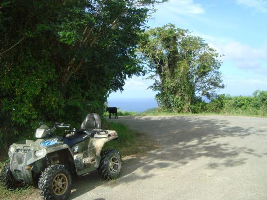 Gecko's Island Adventures