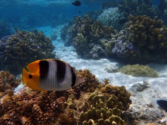 Le Taha'a Island Resort & Spa : Coral Garden