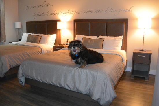 Nicolet, Kanada: Pet friendly and large, comfortable beds