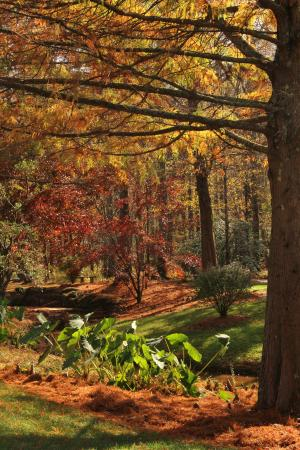 Autumn garden view Picture of Gibbs Gardens Ball Ground TripAdvisor
