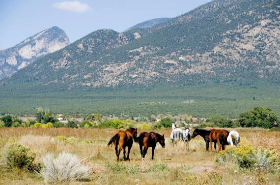 Native American ponies roam an open range near Taos Pueblo, adding to the beautiful landscape.