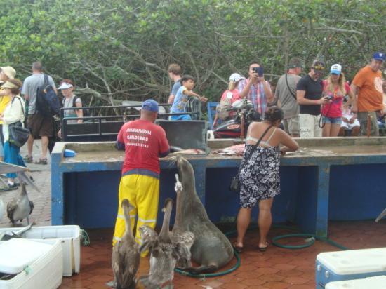 picture of santa cruz fish market puerto ayora tripadvisor