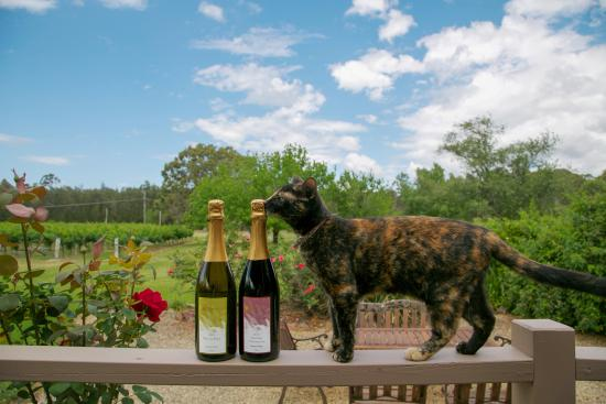 Misty Glen Wines: Wine cat