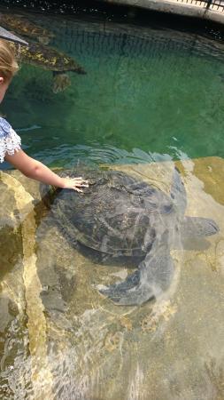 Reefworld Aquarium and Shark Swim Photo