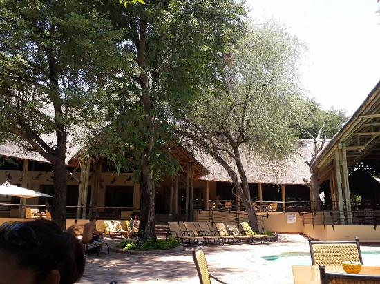 pool area picture of chobe safari lodge kasane. Black Bedroom Furniture Sets. Home Design Ideas