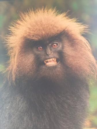 Blackberry Hills Retreat Spa Munnar Scary Monkey Potrait At Reception P