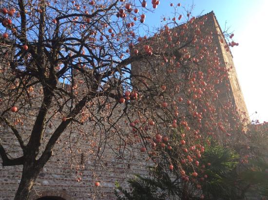 Castello degli Ezzelini