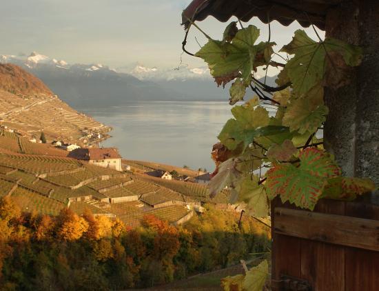 Vaud, Suiza: Vignoble du Lavaux