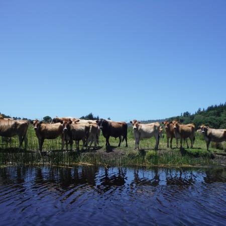 Bushbuck Camp Foto