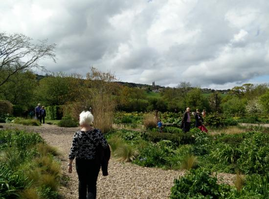 Blagdon, UK: Gravel gardens and landscape, with Mummy Harris in view.