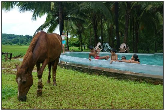 Pomburpa, อินเดีย: Pool