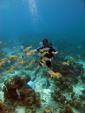bcceb6d2d Tiki Bahia de Cochinos: Zatoka Svin,nadherne miesto na snorchlovanie a aj  potapanie.