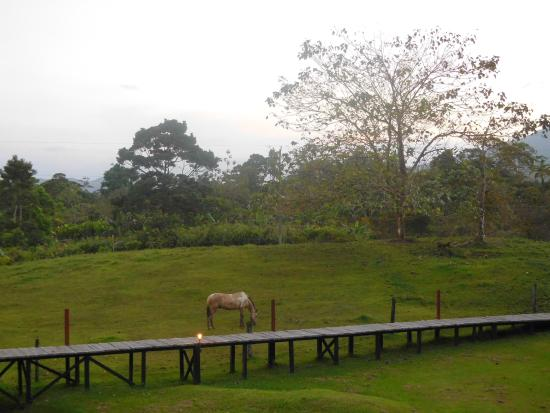 La Anita Rainforest Ranch照片
