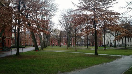 Harvard University Herbaria