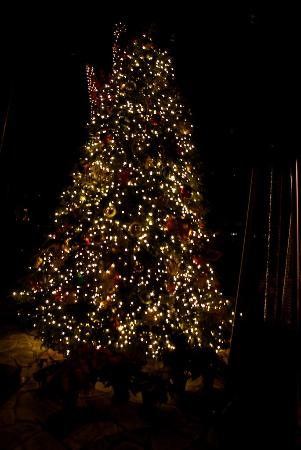 Tree decorated fro Christmas at Sanctuary on Camelback Mountain