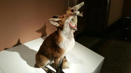 Naturhistorisches Museum: 20151222_153008_large.jpg