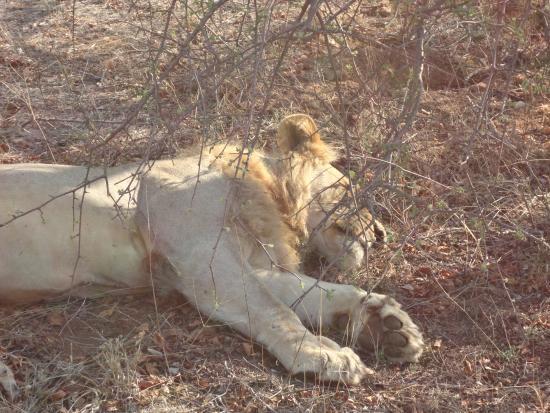 Toro Yaka Bush Lodge: Durante um dos safaris