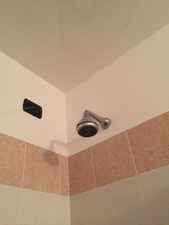 Hotel Della Volta : Il soffione della doccia