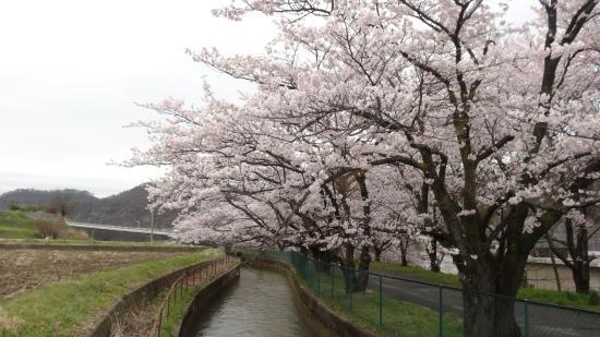 Tokushimasegi