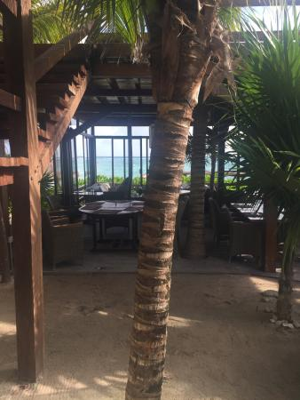 Sahara Cafe: photo3.jpg
