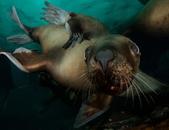 Hornby Island, Kanada: Hello There