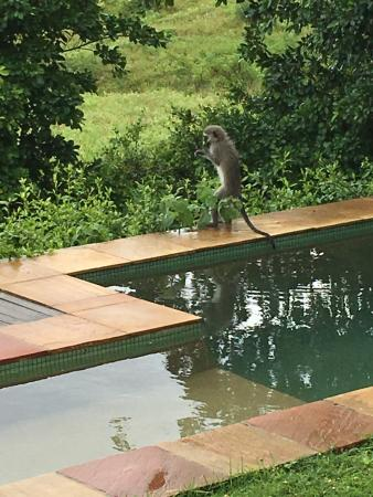 Camp Figtree  |   Addo, Sundays River Valley, South Africa