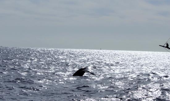 La Princesa Catamaran: Whale