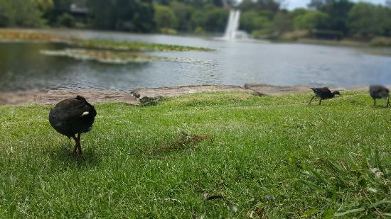 UQ Lakes