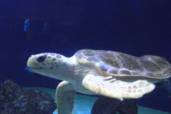 Indigestion Picture Of Birch Aquarium At Scripps La