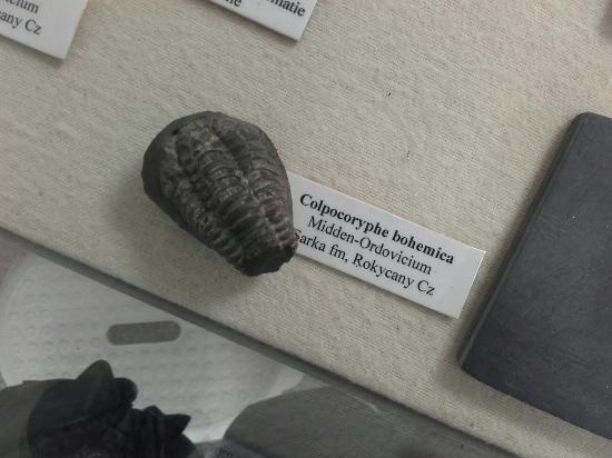 Geologisch Museum Velp