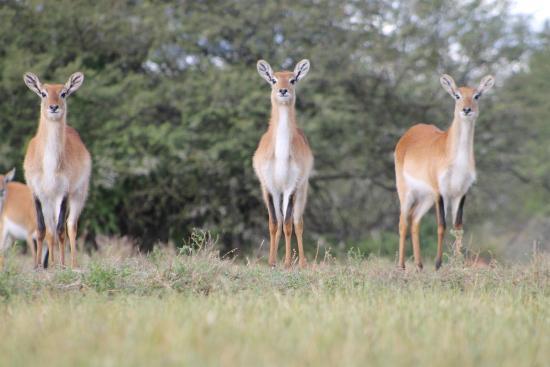Bhejane Game Reserve: Letchwe